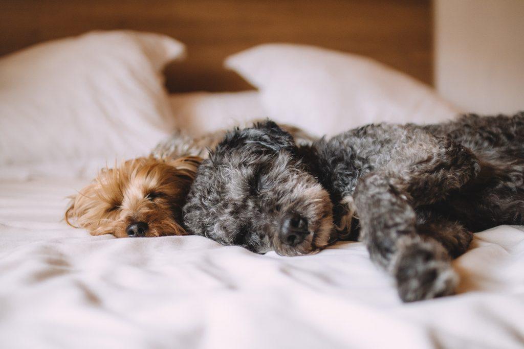 Pet Therapy come il cane aiuta l'uomo a capire il mondo che lo circonda