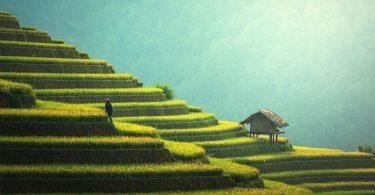 dazi birmania